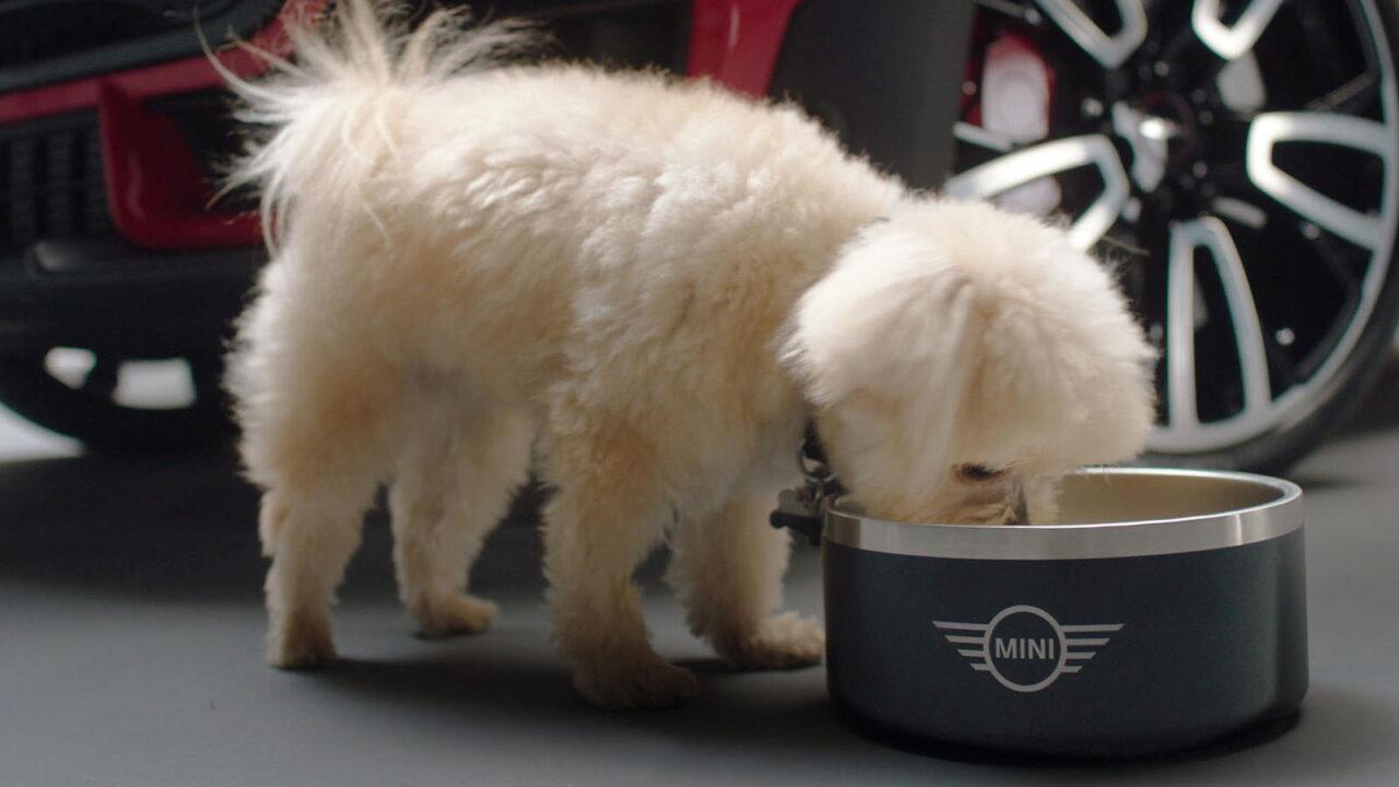 Mini упростит жизнь владельцам собак